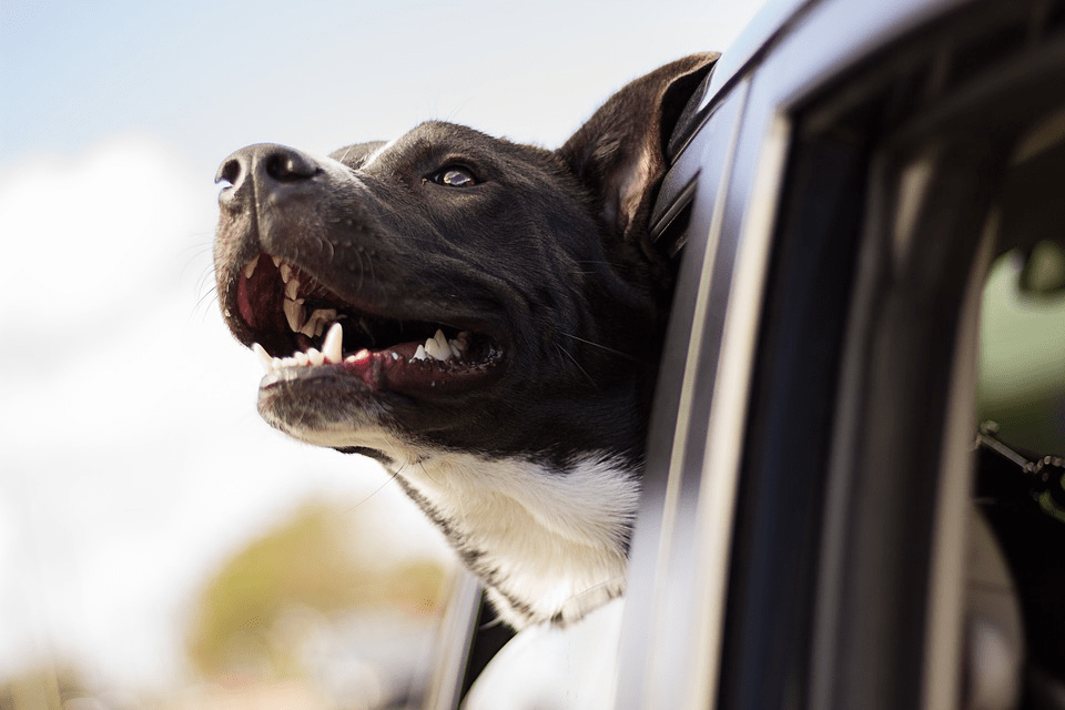 Securing Your Big Dog and Yourself Against Tragedy and Lawsuits